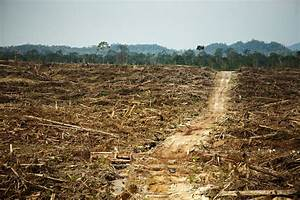 Rainforest destruction – DESERTIFICATION