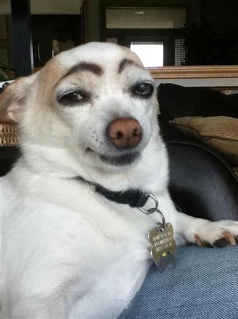awkward internet trend dogs  makeup eyebrows