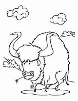 Buffalo Coloring Pages Outline Bison Cowboys Sheet Animals Printable Head Cowboy Football Drawing Wild Cape Wings Baby Animal Template Drawings sketch template
