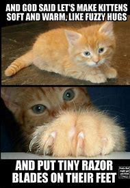 Best Warrior Cats Funny Ideas And Images On Bing Find What You