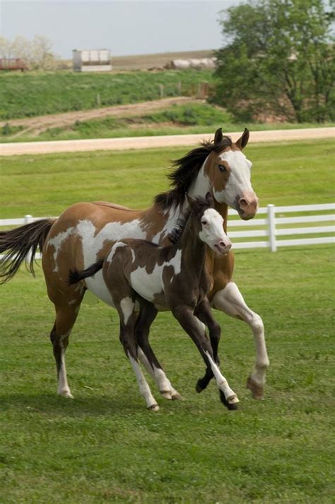 horse paint american powered
