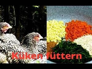 Futter Für Wildvögel Selber Machen : aufzuchtfutter f r k ken selber machen mit brennesseln ~ Michelbontemps.com Haus und Dekorationen