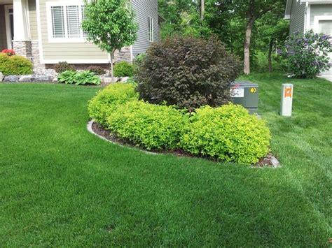 bush ideas for landscaping beautiful foundation plantings utilizing spirea hosta barberry burning bush and ninebarks