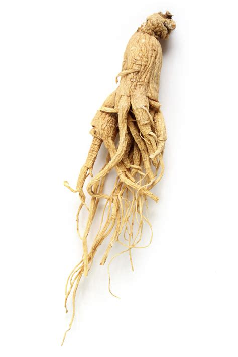 Organic Ginseng Root Powder  Lush Fresh Handmade Cosmetics Uk