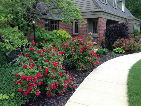 easy care garden ideas easy care garden ideas beautiful double knock out roses i use them as a small hedge around my