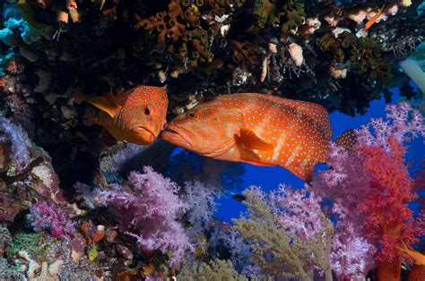 Animals, National Geographic, Fish, Coral, Underwater