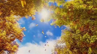 Fall Season Backgrounds Sky Autumn Leaves Falling