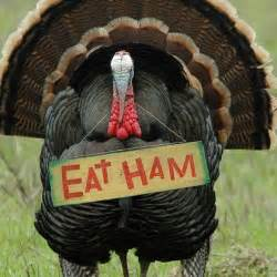 thanksgiving jokes to with your guests wmbfnews myrtle florence sc weather