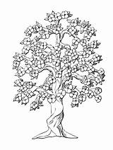 Tree Coloring Peach Oak Pages Trees Flower Drawing Inchworm Drawings Flowers Complicated Symmetry Coloriage Colouring Complex Arbre Monochrome Printable Dessin sketch template