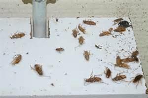 Cafard De Jardin Dans La Maison by Infos Cafards