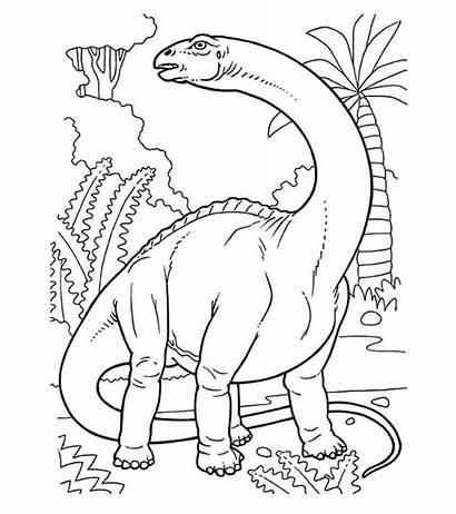 Dinosaur Colouring