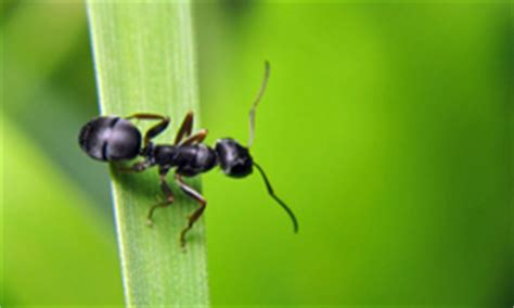 10 Places You May Find Ants | HowStuffWorks