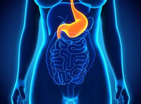 douleur dos cancer douleur 224 l estomac et au dos un signe d ulc 232 re medisite