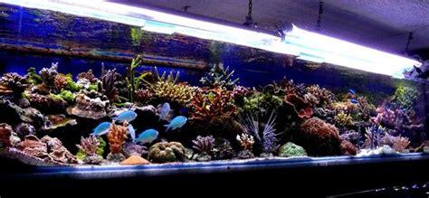 achat aquarium recifal complet achat aquarium plastique