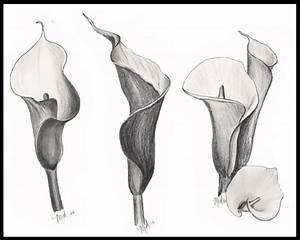 Charcoal drawing of calla lilies | Artist at Work | Pinterest