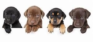 Hunde Größe Berechnen : hundefutter ~ Themetempest.com Abrechnung
