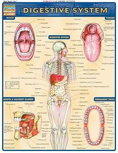 137 Best Images About Human Anatomy And Physiology On