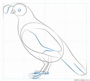 How To Draw A California Quail Step By Step Drawing