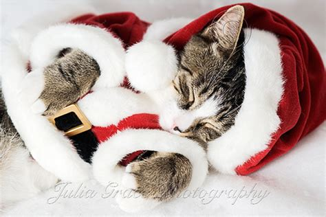 cute  funny christmas pets part  amo images pictures