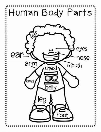 Parts Activities Preschool Teach Slide6