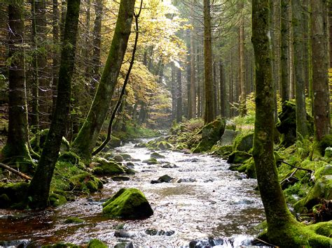 Fileblack Forest Stream (10562132523)g Wikimedia