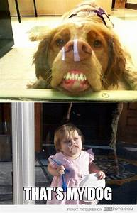 Funny dog pressing his face against glass looking silly ...