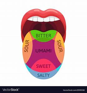 Human Tongue Taste Zones Sweet Bitter And Salty Vector Image