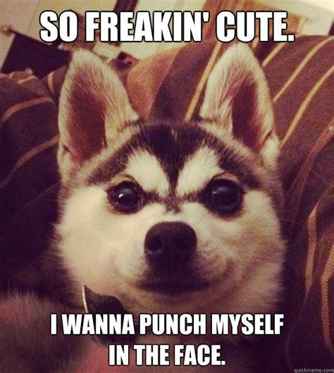 So Cute Meme Face - so freakin cute i wanna punch myself in the face so cute punch myslf in face quickmeme
