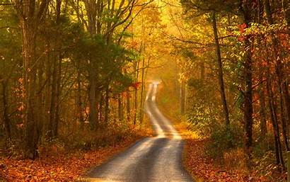 Forest Autumn Road Scenery Wallpapers Jesien Tapety