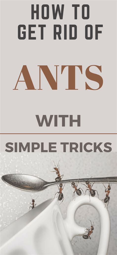 rid  ants   kitchen  simple tricks