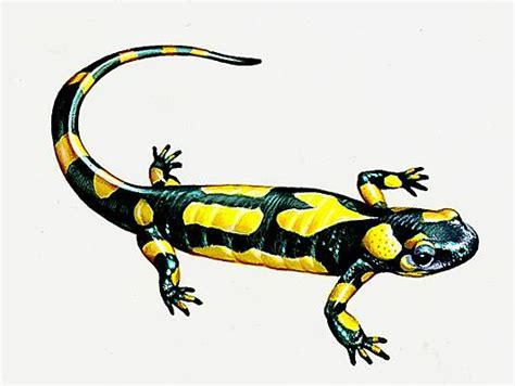 jeux de cuisine de tarte encyclopédie larousse en ligne salamandre
