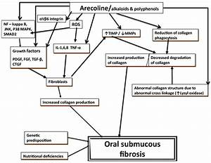Oral Submucous Fibrosis: Review on Mechanisms of ...
