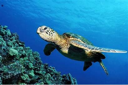 Sea Wallpapers Animals Creature Cool Wallpapertag