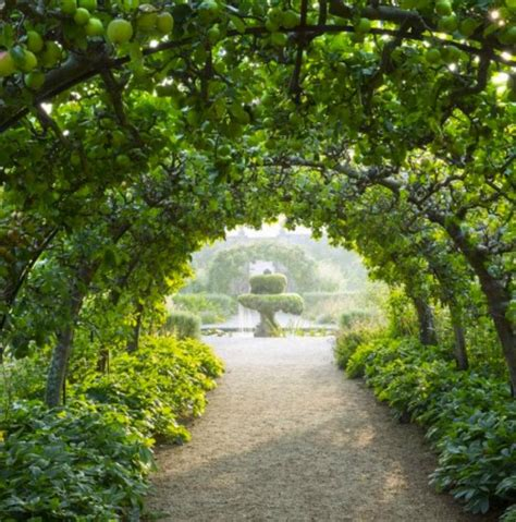 espalier apple tree tunnel highgrove gloucestershire