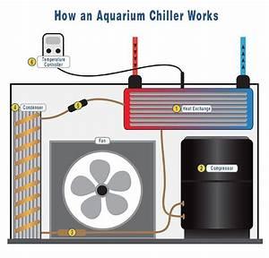 Optimale Aquarium Temperatur : keeping your aquarium water temperature stable and within ideal ranges for sea life is essential ~ Yasmunasinghe.com Haus und Dekorationen