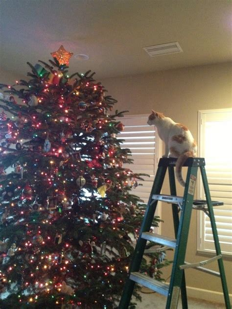 cat first seen christmas tree 247 best cats in trees images on trees trees and