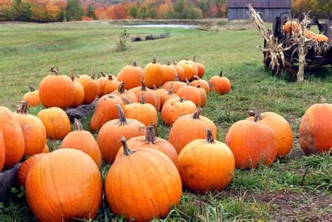 Plant Pumpkins Now For Fall Faces Later  Countryside Network