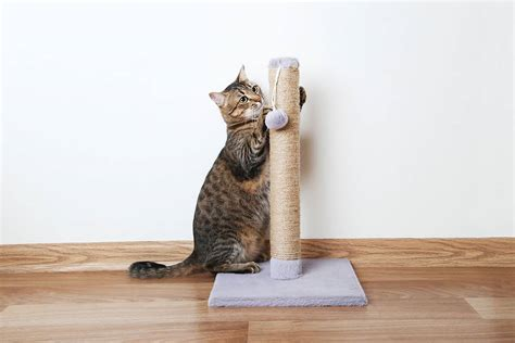 discipline  cat effective ways  solve  cat