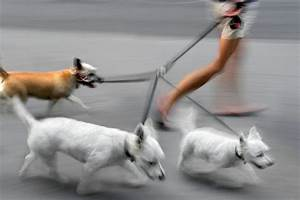 Move briskly walk it off help your pooch lose the for Professional dog walker rates