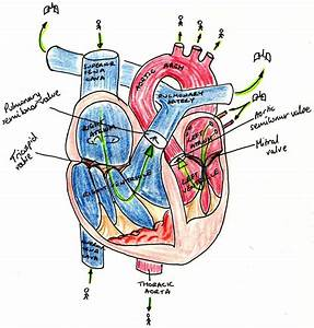 Rr Content  The Circulatory System