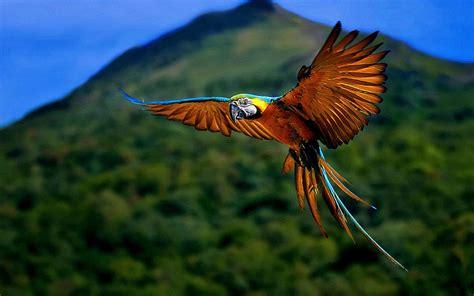macaw bird wallpapers macaw bird wallpapers