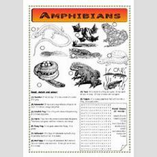 Amphibians  Pond Life  Esl Worksheet By Ibod47