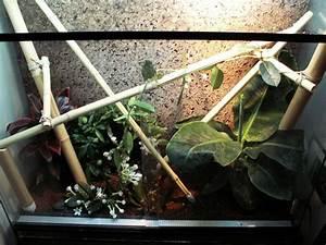 Pflanzen Für Terrarium : weitere pflanzen einrichtung f r phelsuma grandis terrarium dght foren ~ Orissabook.com Haus und Dekorationen