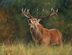 Red Deer Stag Painting by David Stribbling