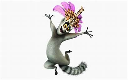 Madagascar Julian King Lemur Background Lemurs Ring