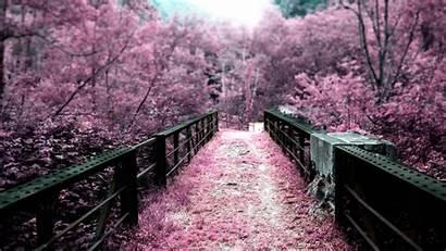 Sakura Japan Landscape Japanese Garden Forests Nature