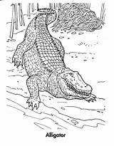 Crocodile Coloring Alligator Pages Printable Crocodiles Realistic Bestcoloringpagesforkids Animal Animals Print Sheets Preschool Getcoloringpages Drawing Coloringme Follow sketch template