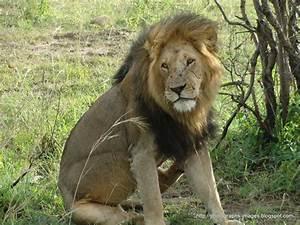 kenya masai mara | Download photographs images | Page 7