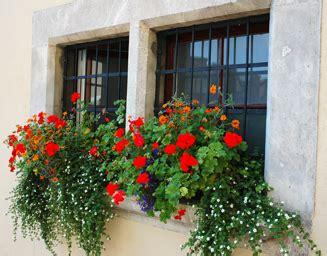 Idées Jardinières Fleuries  L'atelier Des Fleurs