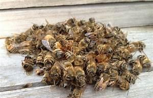 Подмор пчел от потенции